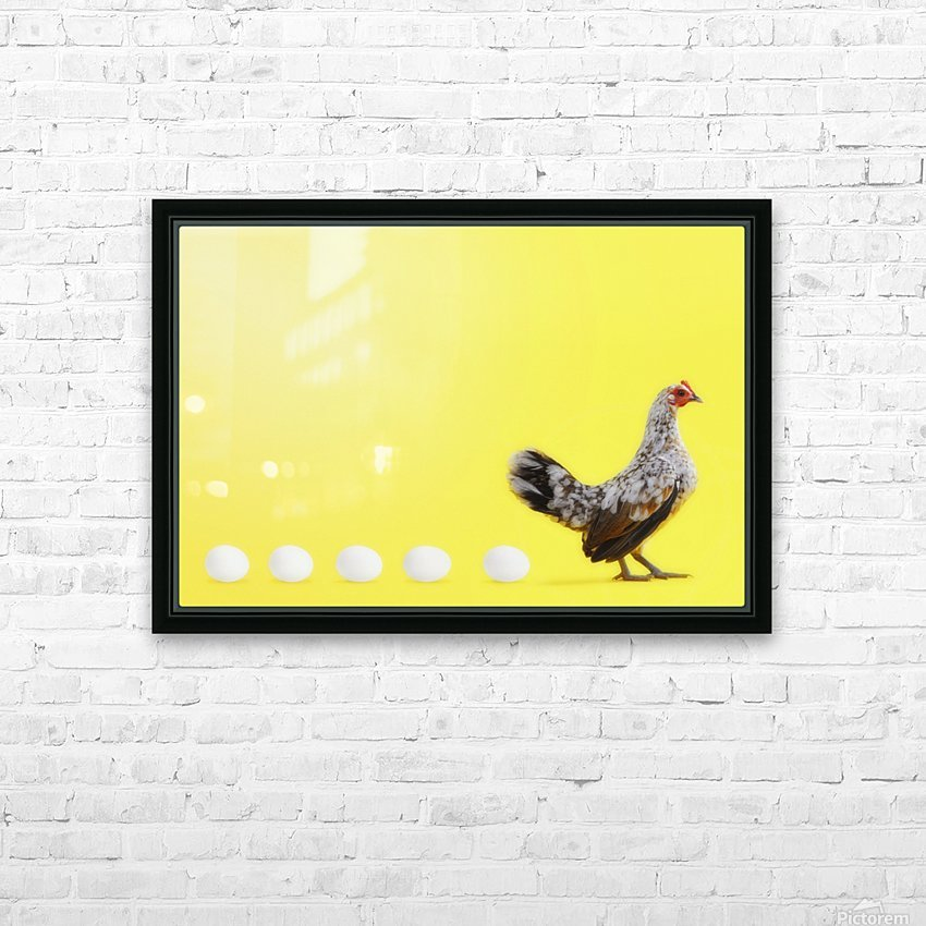 Hen standing in line with five eggs;British columbia canada HD Sublimation Metal print with Decorating Float Frame (BOX)