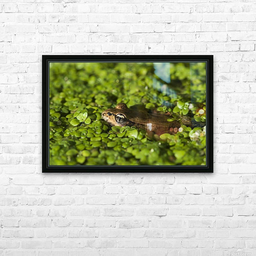 A Red-Legged Frog Rests In Small Plants; Astoria, Oregon, United States Of America HD Sublimation Metal print with Decorating Float Frame (BOX)