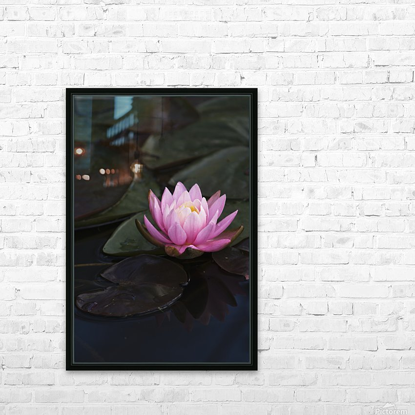 A water lily blooms in a pond; Astoria, Oregon, United States of America HD Sublimation Metal print with Decorating Float Frame (BOX)
