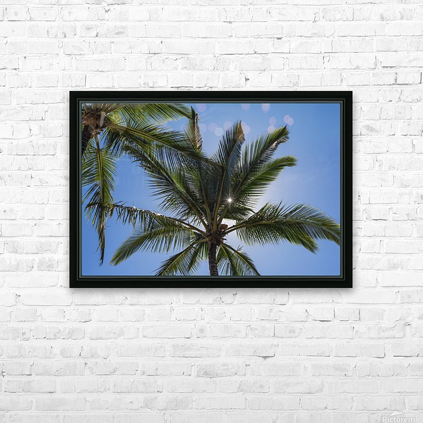 Coconut Palms backlit by the sunlight in a blue sky; Poipu, Kauai, Hawaii, United States of America HD Sublimation Metal print with Decorating Float Frame (BOX)