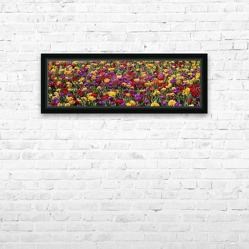 Tulips at the Canadian Tulip festival; Ottawa, Ontario, Canada HD Sublimation Metal print with Decorating Float Frame (BOX)