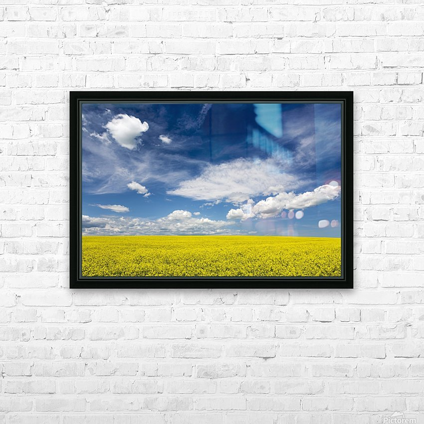 Flowering canola field with clouds and blue sky; Alberta, Canada HD Sublimation Metal print with Decorating Float Frame (BOX)