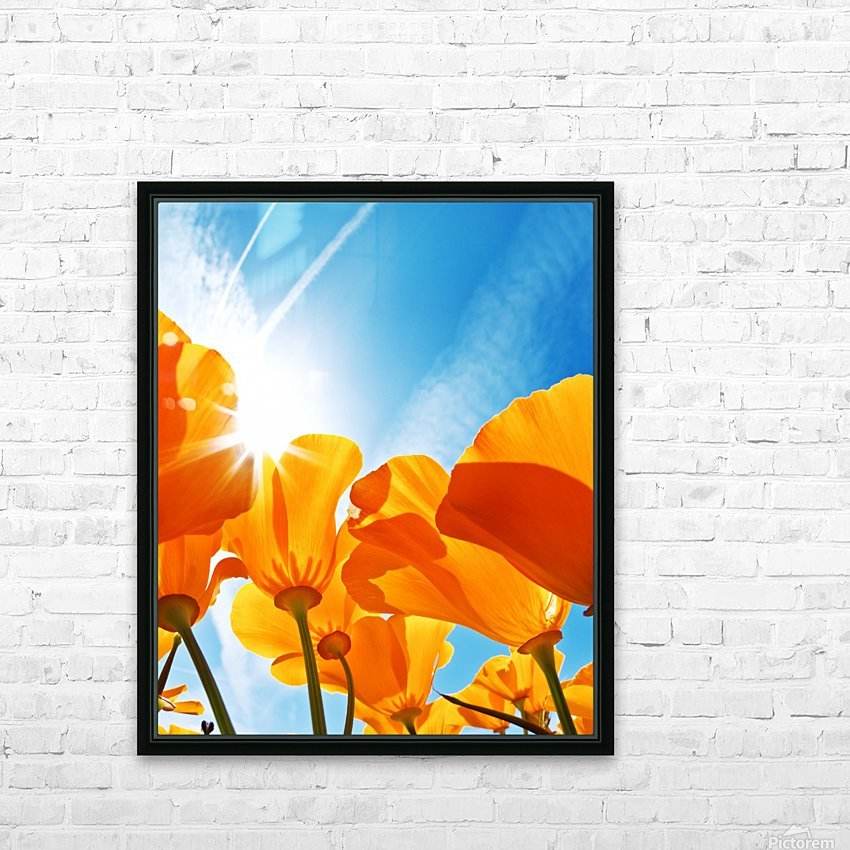 Field of Flowers with Blue Sky, Macro View HD Sublimation Metal print with Decorating Float Frame (BOX)