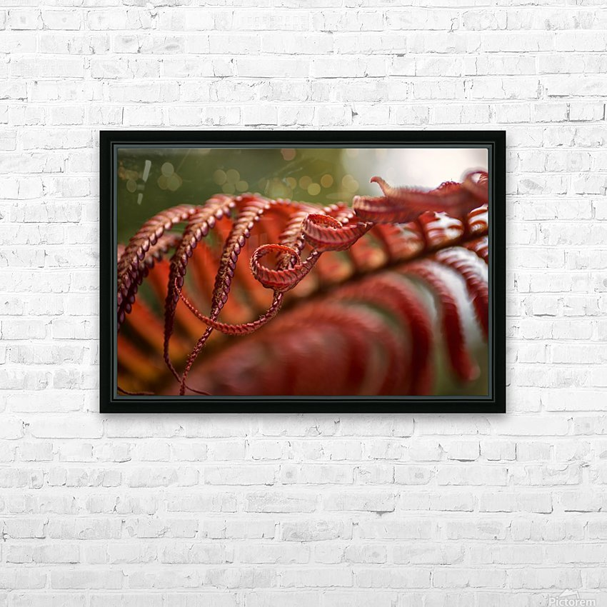 Close up of a crimson Amau fern; Hawaii, United States of America HD Sublimation Metal print with Decorating Float Frame (BOX)