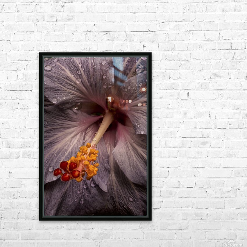 Close up of a Hibiscus flower with water droplets; Hawaii, United States of America HD Sublimation Metal print with Decorating Float Frame (BOX)