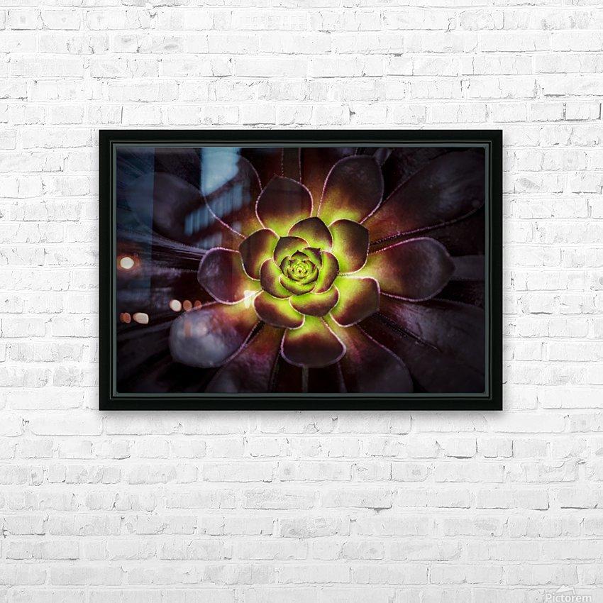 Purple and green Aeonium, Dublin Botanic Garden; Dublin, Leister, Ireland HD Sublimation Metal print with Decorating Float Frame (BOX)