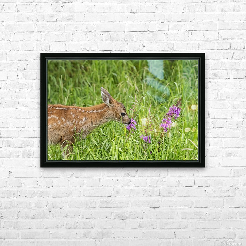 Sitka Black-tailed deer fawn (Odocoileus hemionus sitkensis) munches on fireweed (Chamerion angustifolium) in pasture, captive animal at the Alaska Wildlife Conservation Centre; Portage, Alaska, United States of America HD Sublimation Metal print with Decorating Float Frame (BOX)