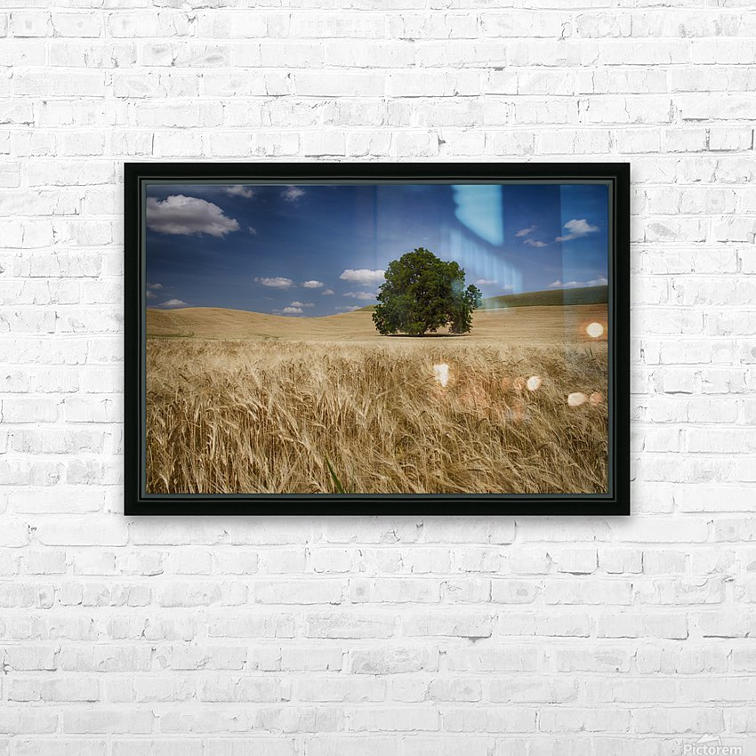 Lone tree in a wheat field; Palouse, Washington, United States of America HD Sublimation Metal print with Decorating Float Frame (BOX)