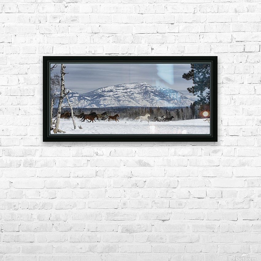 Horses running in the snow on a ranch in winter; Montana, United States of America HD Sublimation Metal print with Decorating Float Frame (BOX)