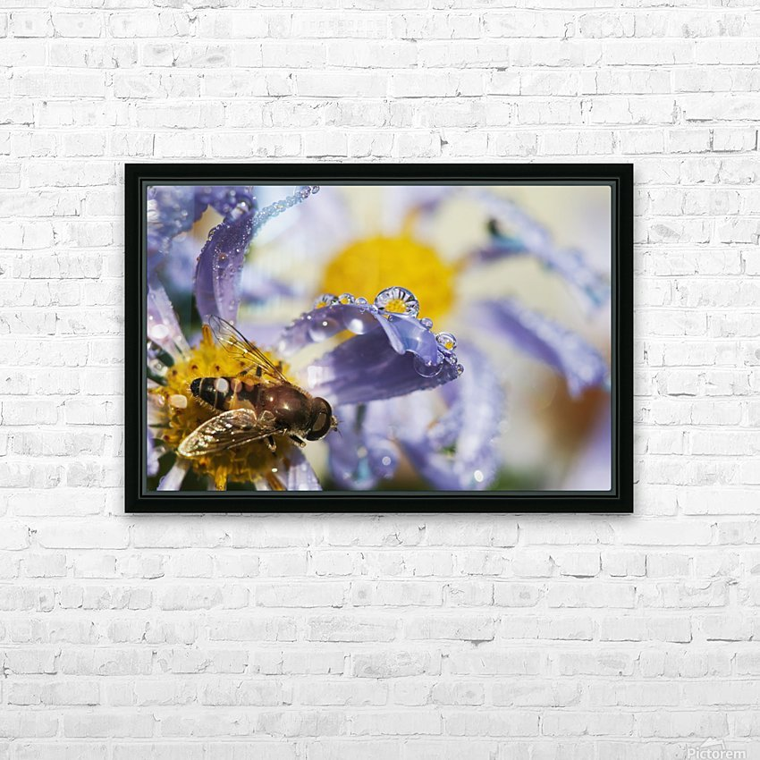 A Fly Rests On Aster Blossoms; Astoria, Oregon, United States Of America HD Sublimation Metal print with Decorating Float Frame (BOX)