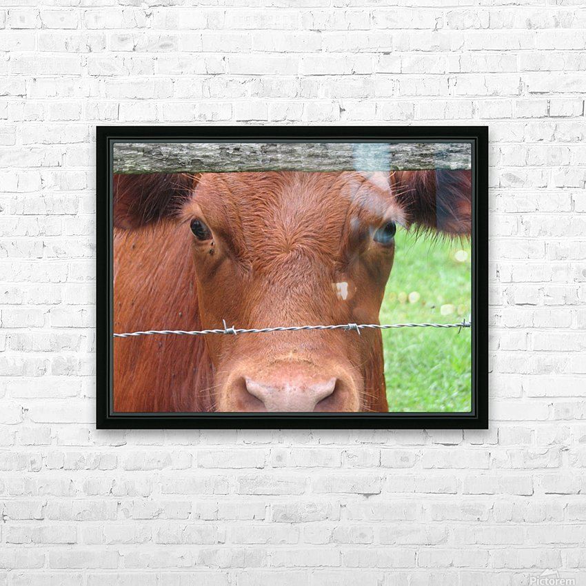 Cow in Stevenson, MD VP 2 HD Sublimation Metal print with Decorating Float Frame (BOX)