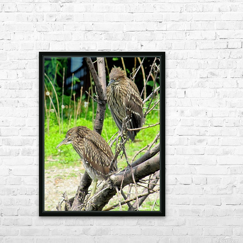 Birds in Lincoln Park  HD Sublimation Metal print with Decorating Float Frame (BOX)