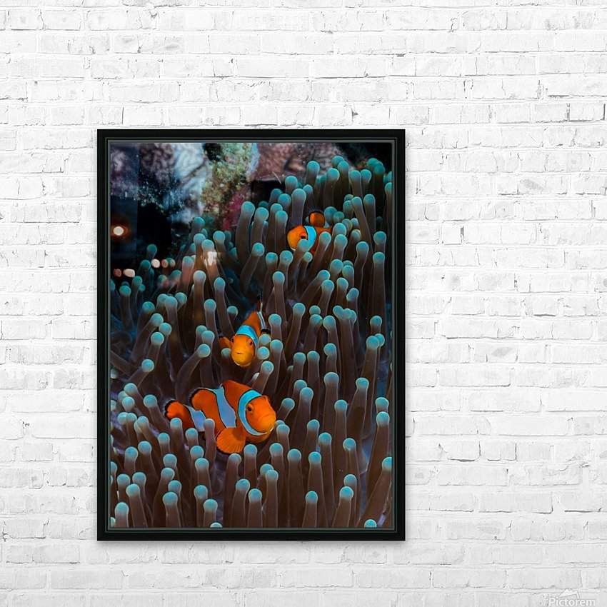 clown fish HD Sublimation Metal print with Decorating Float Frame (BOX)
