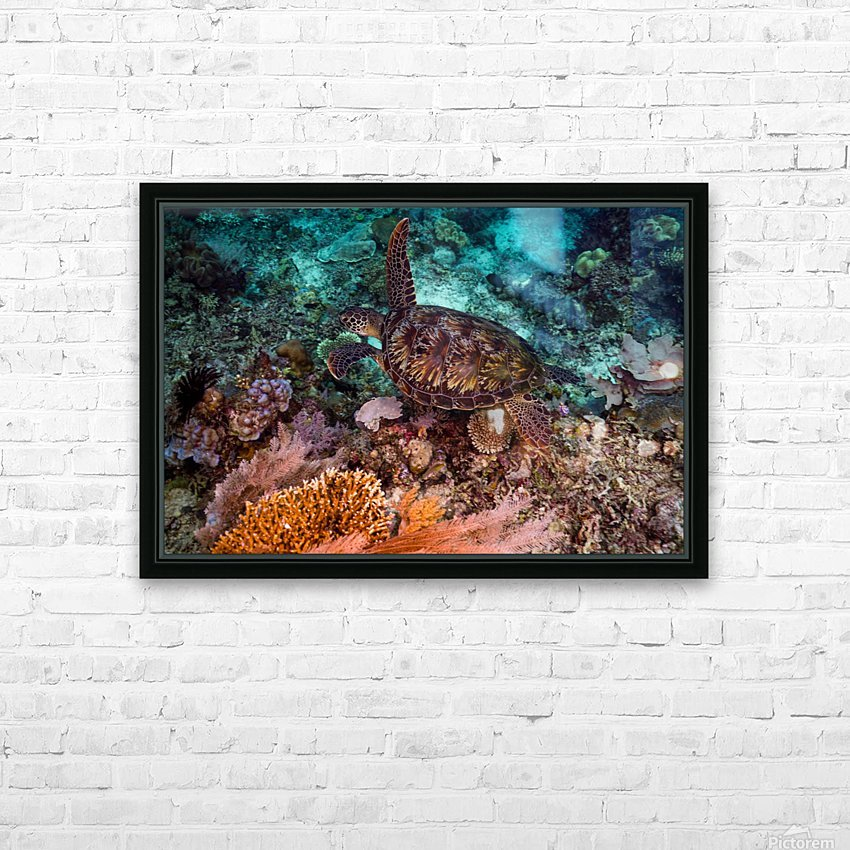 Clean turtle HD Sublimation Metal print with Decorating Float Frame (BOX)