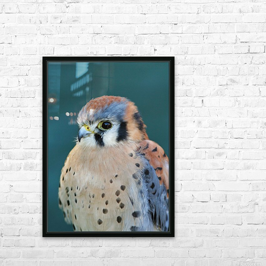 American Kestrel HD Sublimation Metal print with Decorating Float Frame (BOX)