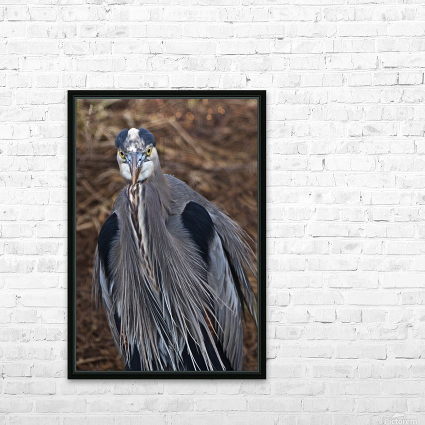 Face on view of great blue heron HD Sublimation Metal print with Decorating Float Frame (BOX)