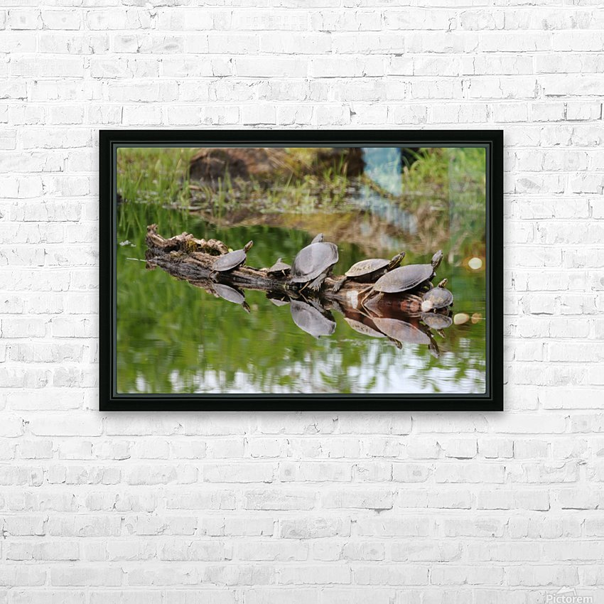 Turtle reflections HD Sublimation Metal print with Decorating Float Frame (BOX)