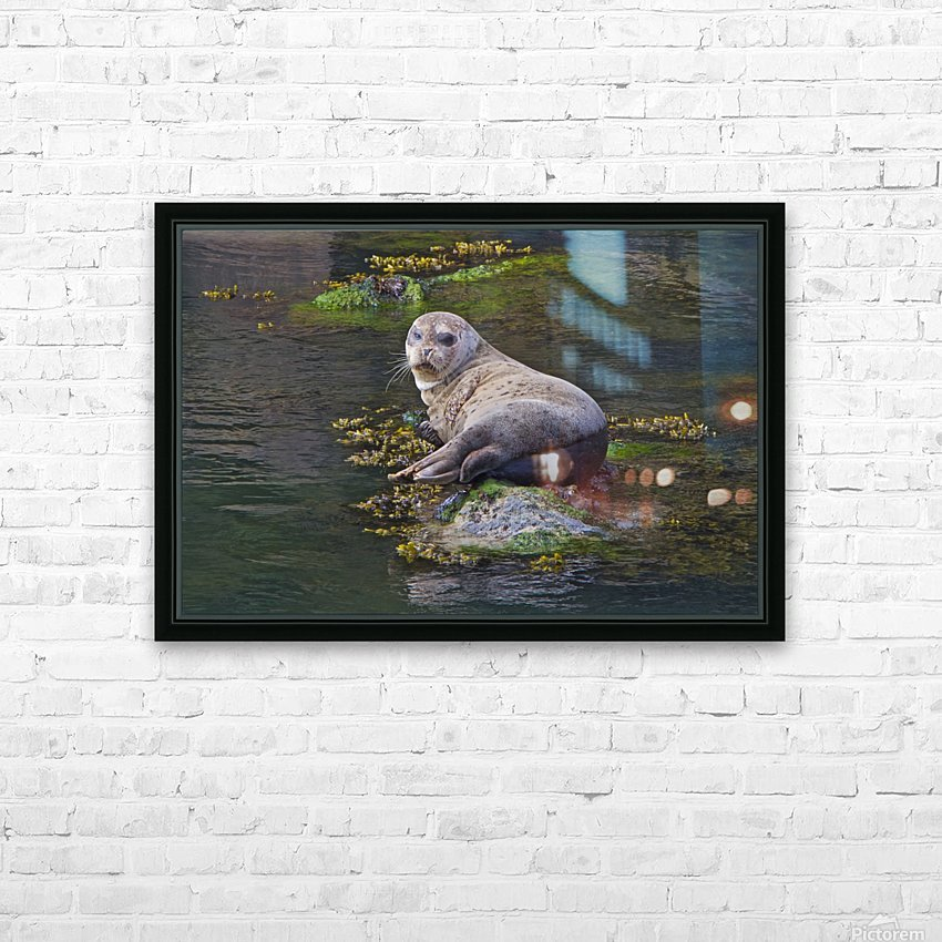 Sea lion near Depoe Bay, OR HD Sublimation Metal print with Decorating Float Frame (BOX)