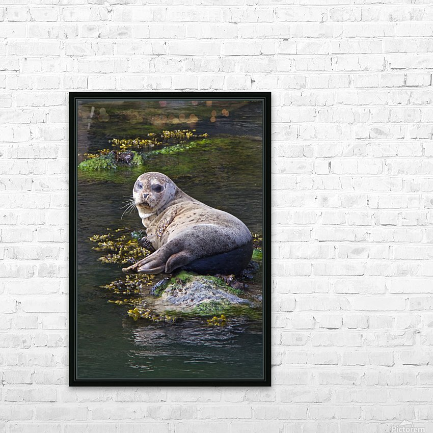 Sea lion portrait near Depoe Bay, OR HD Sublimation Metal print with Decorating Float Frame (BOX)