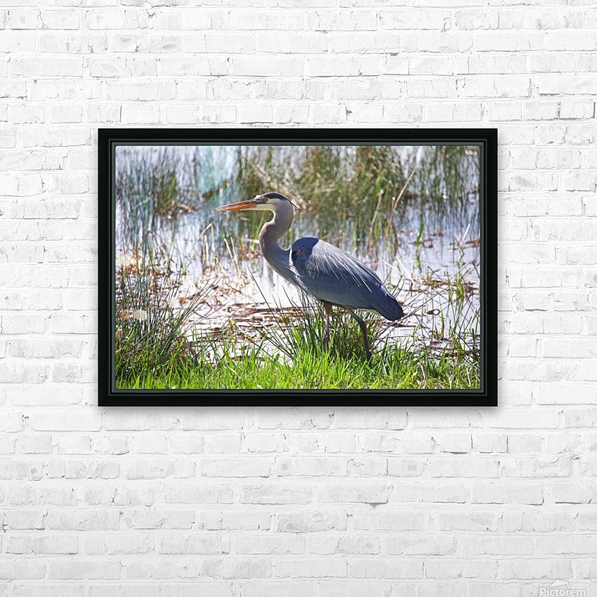 Great Blue Heron profile HD Sublimation Metal print with Decorating Float Frame (BOX)