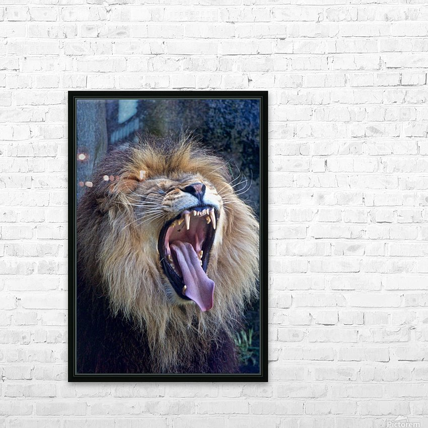 A roar...or a yawn! HD Sublimation Metal print with Decorating Float Frame (BOX)
