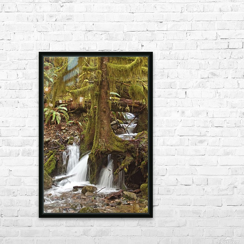 Water flowing through tree roots at Opal Creek Wilderness, Oregon HD Sublimation Metal print with Decorating Float Frame (BOX)