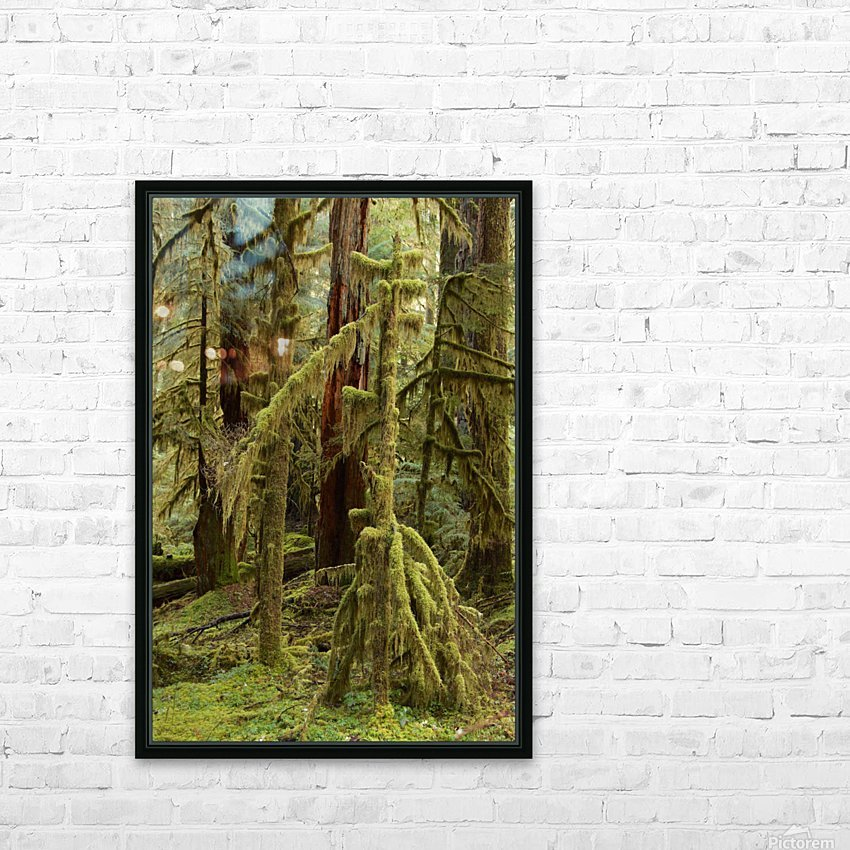 Moss covered tree in the Opal Creek Wilderness, Oregon HD Sublimation Metal print with Decorating Float Frame (BOX)