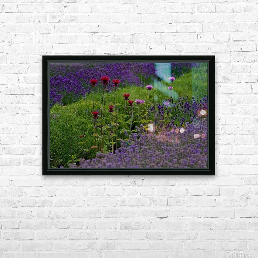 Bee Balm Blooming in Lavender Field HD Sublimation Metal print with Decorating Float Frame (BOX)