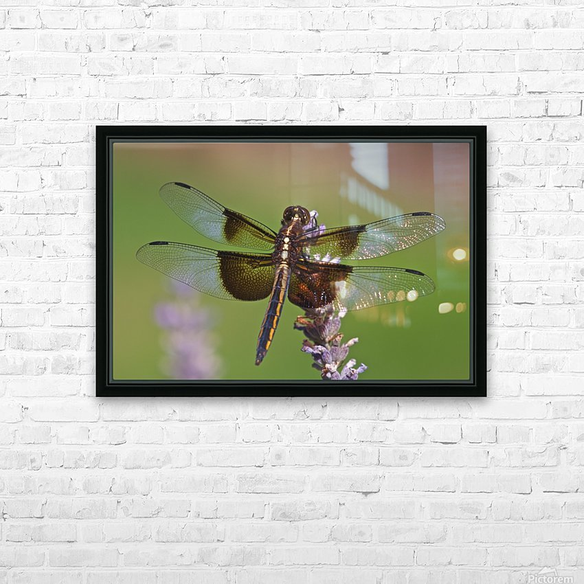 Dragonfly on Lavender HD Sublimation Metal print with Decorating Float Frame (BOX)