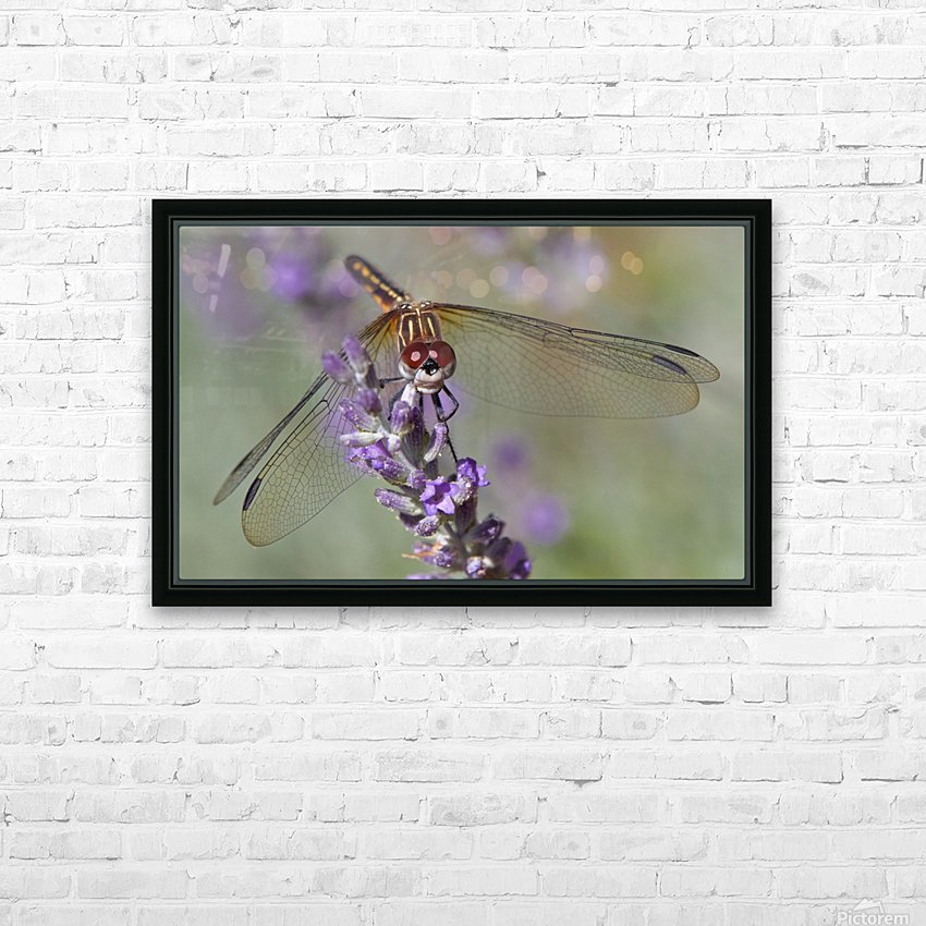 Dragonfly resting on flower. HD Sublimation Metal print with Decorating Float Frame (BOX)