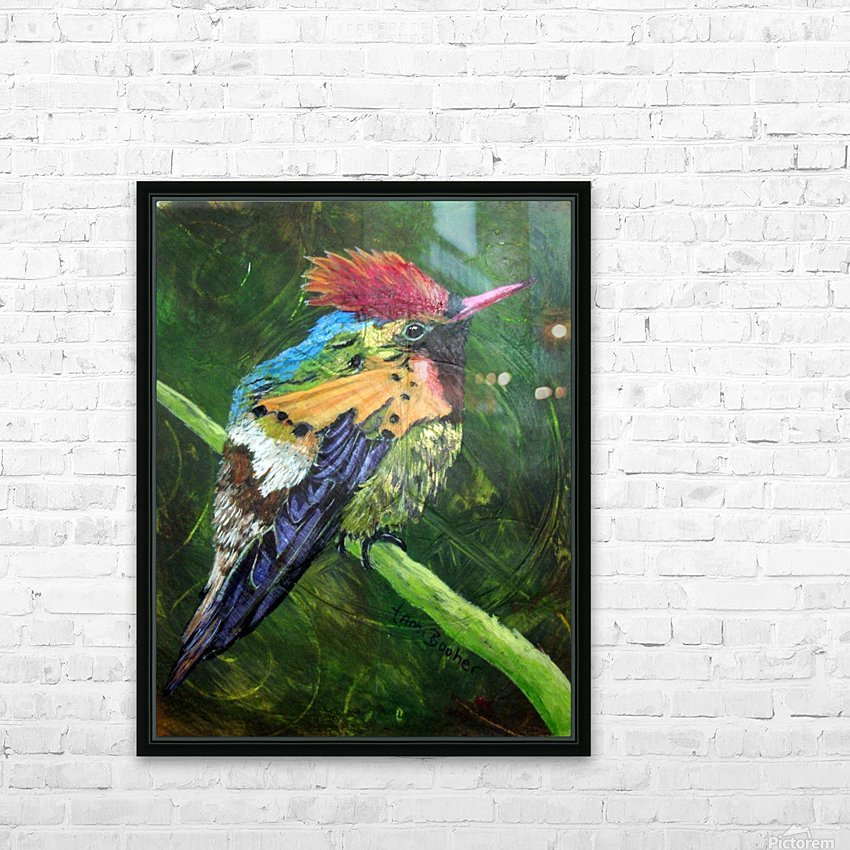Tufted Coquette Hummingbird HD Sublimation Metal print with Decorating Float Frame (BOX)