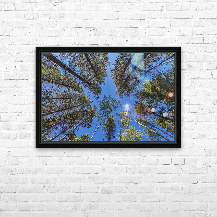 Tree Tops Near Grassi Lake Trail, Alberta HD Sublimation Metal print with Decorating Float Frame (BOX)