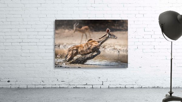 Kudu jump