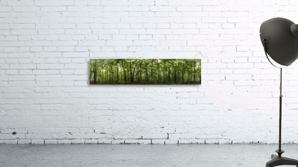 Panoramic image of a deciduous forest; Ontario, Canada