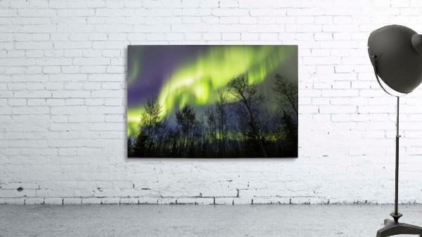 Aurora borealis over silhouetted trees; Alaska, United States of America