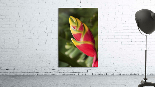 Close-up of lobster-claw heliconia flower; Maui, Hawaii, United States of America