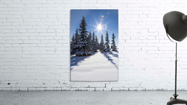 Snow covered evergreen trees on a snow covered hillside with blue sky and sun burst; Calgary, Alberta, Canada