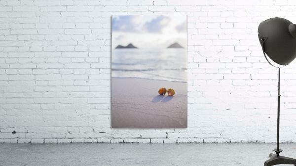 A set of two rare Hawaiian Sunrise Scallop Seashells, also known as Pecten Langfordi, in the sand at Lanikai beach, with Mokulua islands in background; Honolulu, Oahu, Hawaii, United States of America