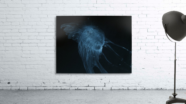 Glowing blue jellyfish in the dark water