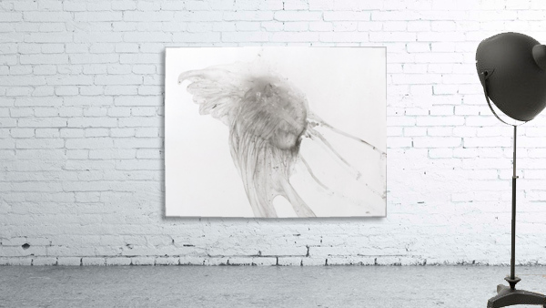 Jellyfish against a white background