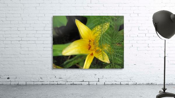 Yellow Flower-2
