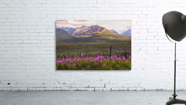 View Of The Chugach Mountains With Fireweed In The Foreground Along The Glenn Highway, Southcentral Alaska, Summer, Hdr
