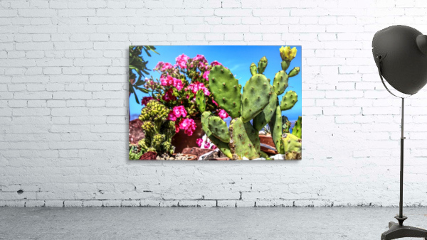Cactus and colourful Flowers