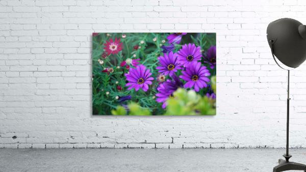 Purple Flowers in Dana Point CA