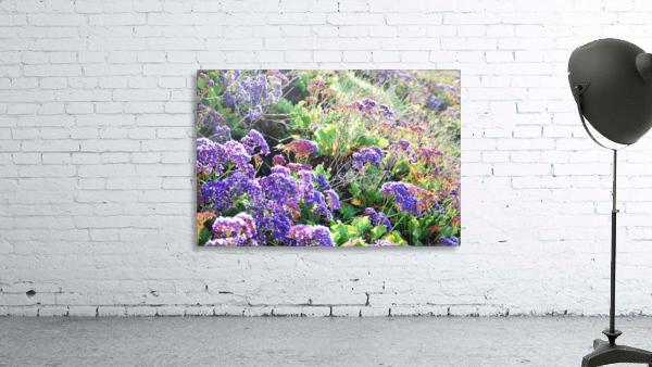 Purple Wild Flowers in Dana Point CA