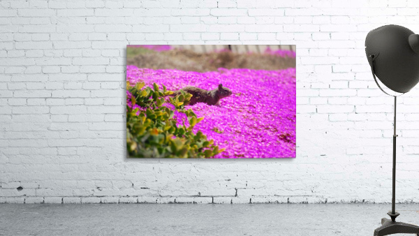 Pink Wild Flowers on a Hill With a Squirrel