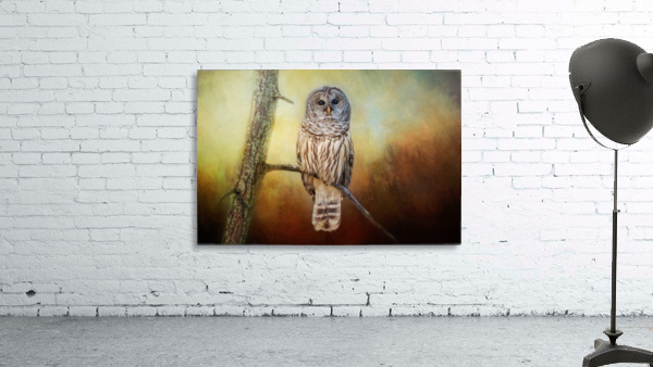 Barred Owl at sunrise with Textures