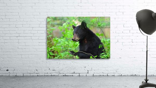 3646-Bear Lunch