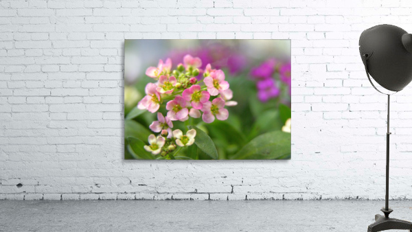 Small Pink Flowers Photography