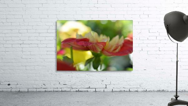 Garden Flowers Art Photograph